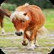 Pony Jigsaw Puzzle: Free by NeonatCore