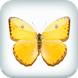 Butterfly Live Wallpaper by Bastiaan Mastix Corp