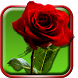 Roses Live Wallpaper by Live Wallpaper HD 3D