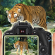 Safari Wild Animal Photography by Golden Peak