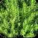 الأعشاب:علاج فعال لأمراض كثيرة by trofazix