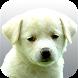 Perros.Todas las razas y fotos by sfy