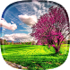 Spring Live Wallpaper by Happy live wallpapers
