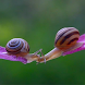 Kissing Snails Video Wallpaper by Kobs