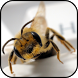 Bee Wallpapers by PikasApps
