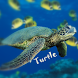 Turtle Wallpaper by Baby Loves Learning
