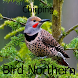 Chirping Bird Northern by Tidut app