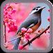 Cool Wallpapers - Birds