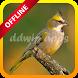 Canto de Coleiro Macheando Offline by ddwip apps
