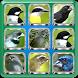 Birdsong Complete | Offline Audio by azalea.musicstudio