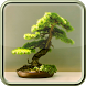 Bonsai Care Guide by Rowan Saturnin