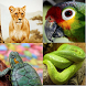 Guess The Animal Quiz by Erisneur Android