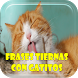 Frases Tiernas con Gatitos by Loretta Apps