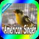 Canaries American Singer by canto de app