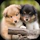 cute puppies wallpapers HD by devlopper-app-free