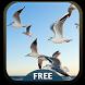 Sea Gulls Theme by Amazing Keyboard Themes