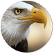 Eagle Wallpapers by Recci