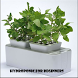 Hydroponic For Beginners