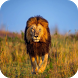 Lion GIF Images by Dabster Gif Zone