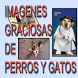 Imagenes perros y gatos humor by STKKTSapps