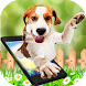 Dog walks On Screen - Cute Dog in Phone Funny Joke by Enjoy4Fun