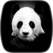 Panda Video Wallpaper by Credianz