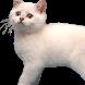 Flappy Kitty Reborn by Buddylist Co.