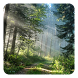 Forest Live Wallpaper by Pro Live Wallpapers