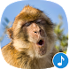Appp.io - Monkey Sounds
