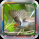 Master Prenjak|Kicau Burungmp3 by Tone best app.Inc