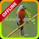 Coleiro Tui Tui Mestre New Offline by ddwip apps