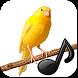 Birds singing sound Canarios by Ankanetwork