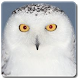 Owls of Japan by Digital Global Systems inc.
