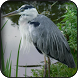 Heron Wallpapers by HAnna
