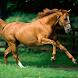 Horses Live Wallpaper HD by Fusion Wallpaper