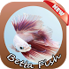 Betta Fish Wallpapers by abyarafif