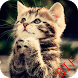 Cute Funny Animal GIF by Pinaci Developer