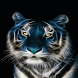 Abstract Tiger Live Wallpaper by Daksh Apps