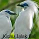 Kicau Jalak Bali by Tidut app