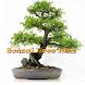 Bonsai Tree Idea by ufaira