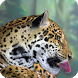 Jaguar Animal Live Wallpaper by WallpapersLove