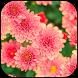 Flowers wallpapers by veronikadev