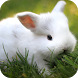 Rabbits GIF by Dabster Gif Zone