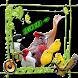 pássaros canoros do Brasil by Raja Burung App