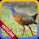 Passaros Nativos Canto Zabele Offline by ddwip apps