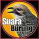 Kicau Burung Lengkap by Senirupaa
