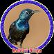 Kolibri Ninja Ngobra MP3 by Goodapps Project