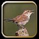 Kumpulan Kicau Burung Wren by Silalahi App