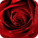 Rose GIF Images by Dabster Gif Zone