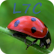 """L7C """"Loto Foot"""" Calculator by SimCo Project Softwares"""
